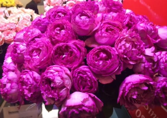 Tuoksuva ruusu essen