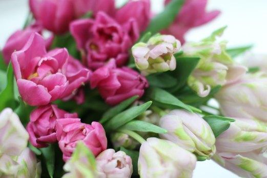 Tulppaaneja läheltä Huiskulasta
